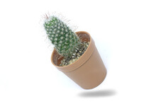 Cactus In A Tilted Pot Floats From A White Background Has A Shadow On A White Background.
