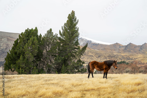 Horses standing in a pasture with mountains in the background. Fototapet