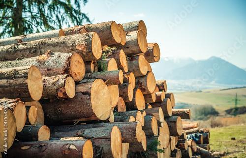 Fotografie, Tablou Log spruce trunks pile