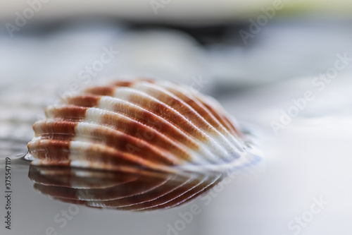 Photo Bright colorful shell on water with reflection.