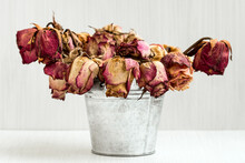 Bouquet Of Dead Withered  Rose...