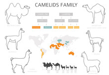 Camelids Family Collection. Ca...