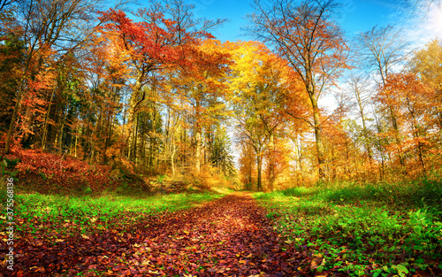 Fototapety, obrazy: Forest path in vibrant autumn colors