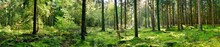 Panorama Of A Forest With A Gl...
