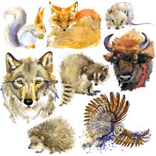 Forest Animals Set. Woodland F...