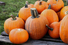 Pumpkin Patch In The Fall Octo...