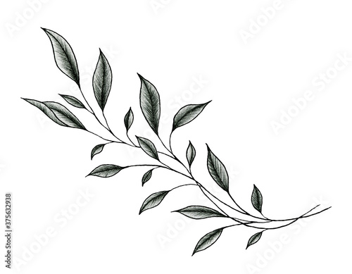 Photo vintage leaf drawing isolated on white, ink  hand drawn botanical illustration o