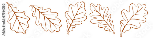 Autumn oak leaves on a white background, vector illustration Canvas