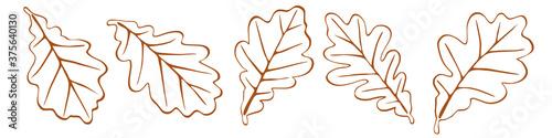 Fototapeta Autumn oak leaves on a white background, vector illustration
