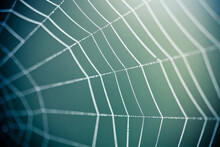 Close Up Of A Spider Web With A Dark Blue Green Background