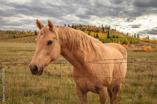 Fotografia, Obraz Horse in field in fall