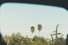 Two Palm Trees Sticking Out Ou...
