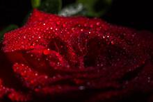 Beautiful Red Romantic Rose Wi...