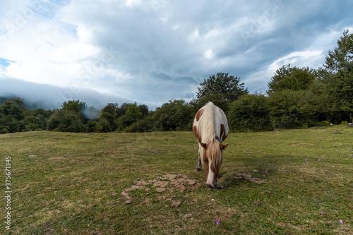 Photo Retrato de caballo moteado salvaje de la sierra de Urbasa