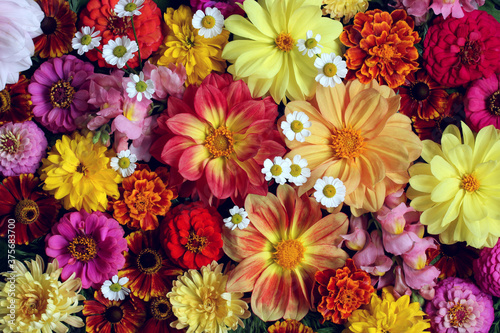 floral background with dahlias. Canvas