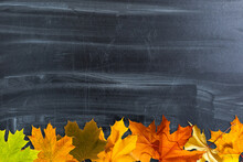 Autumn Background With Fall Le...