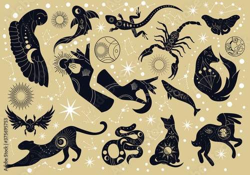 Fototapeta Set of black silhouette mystery or mythological animals with decorative patterns on a star studded background, colored vector illustration
