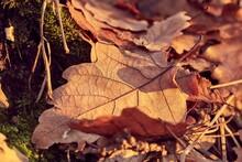 Fallen Autumn Leaves On The Gr...