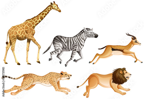 Fotografija Set of safari animals on white background