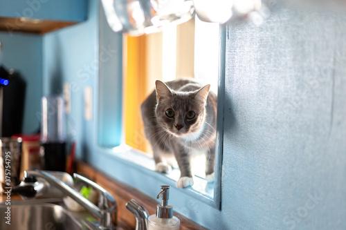 Fototapeta kitty in the window