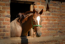 Riding Horse In His Stable
