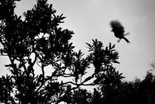 Bird Silhouette In Tree