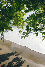 Overhanging Trees On The Beach On A Sunny Day.