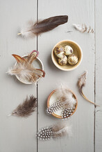 Quail's Eggs And Feathers Of Chicken, Guinea Fowl And Goose