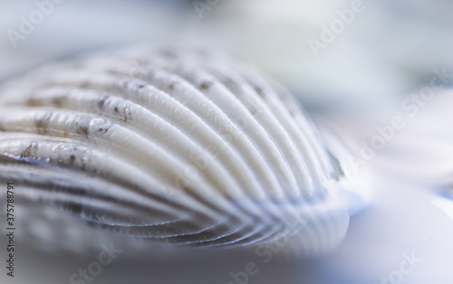 Photo White conch shell on water with reflection