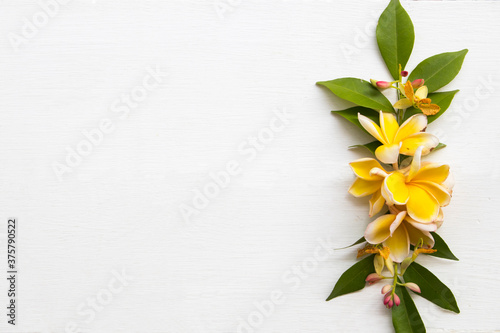 yellow flowers frangipani local flora of asia arrangement flat lay postcard styl Canvas