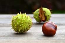 Horse Chestnut On A Wooden Tab...