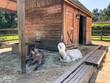 canvas print picture - Sammamish Animal Sanctuary