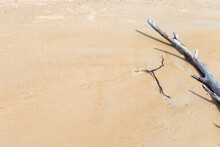 Dead Dry Tree On Sand Beach, E...