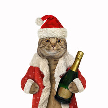 A Beige Big Eyed Cat Santa Claus Holds A Bottle Of Champagne. White Background. Isolated.