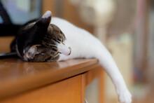 のんびり暮らす猫  ...