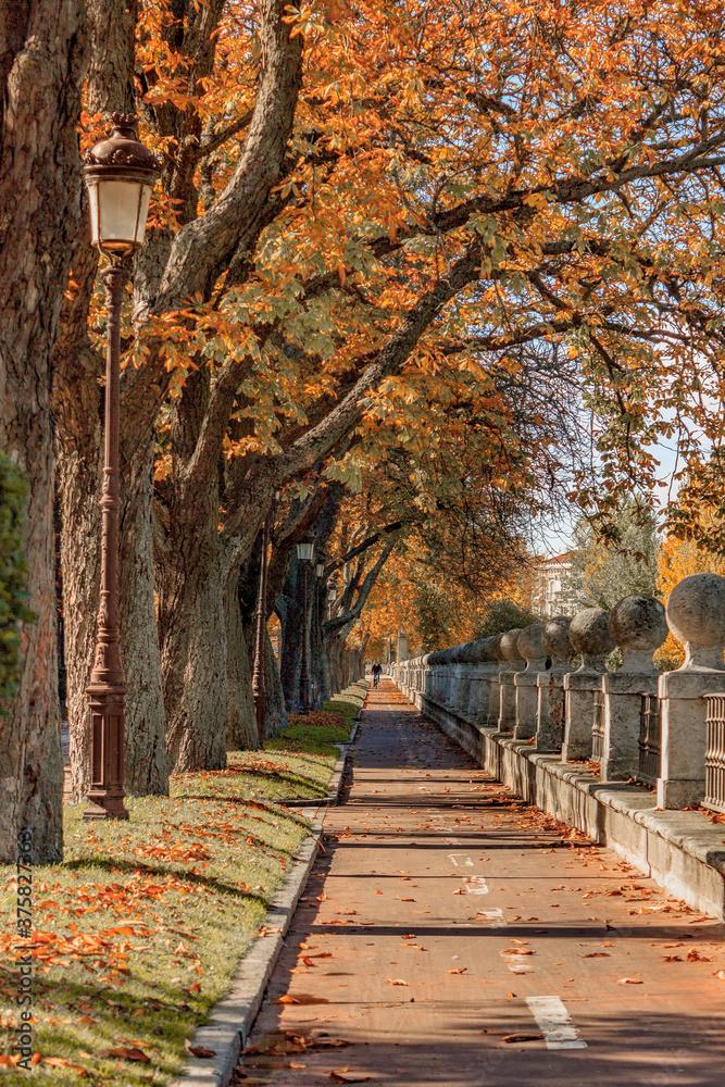 Fototapeta Vertical shot of an autumnal park pathway