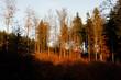canvas print picture - Im Herbst tragen die Baeume und Straeucher ein buntes und schoenes Laub. Thueringen, Deutschland, Europa