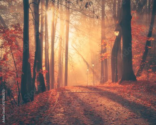 Obraz na plátně Foggy alley at sunrise.
