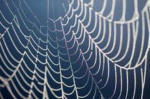 Closeup Shot Of The Spider Web...