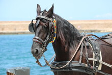 Horse In The Old Harbour Of Ch...