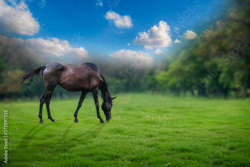 Foto horse and foal