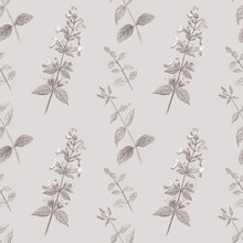 Monochrome Light Grey Seamless Pattern With Hand-drawn Garden Balm. Modern Floral Ornament. Great For Fabric, Wallpapers And Wrapping Paper.