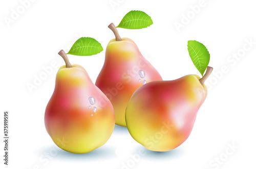 Fototapeta pear isolated on white background
