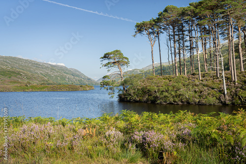 Eilean Na Moine islet at Loch Eilt, Scotland, UK Canvas Print