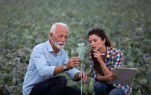 Farmers Checking Water Quantity In Rain Gauge In Field