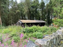 Log Cabin, With Wild Plants, R...