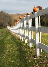 Pumpkins On A White Wooden Fen...