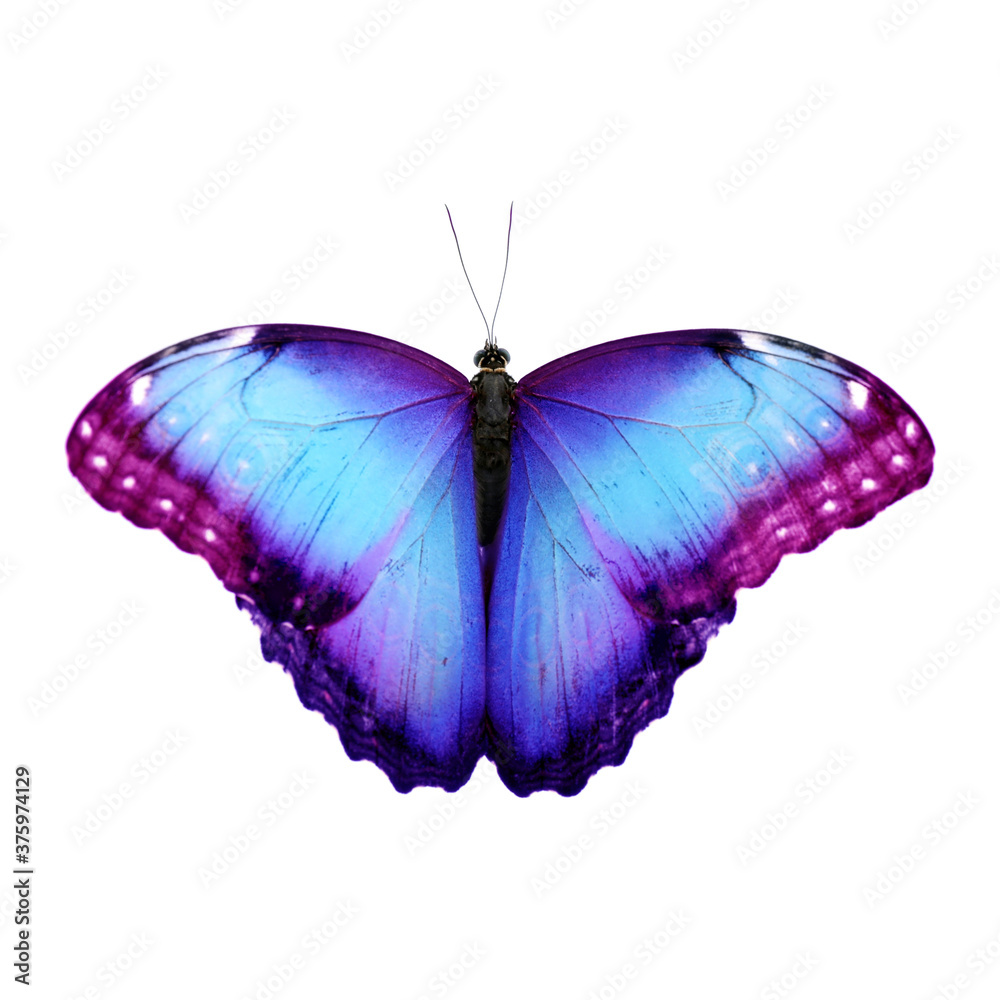 Fototapeta Amazing bright color butterfly isolated on white