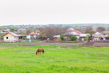 Village With Grazing Horse On ...