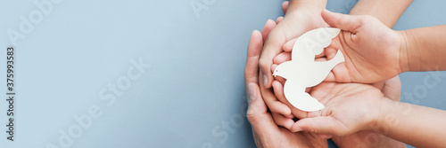 Fotografiet Adult and child hands holding white dove bird on blue background, international